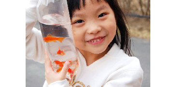 Packing Live Small Ornamental Fish - Glasgow West End